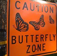 butterfly-zone