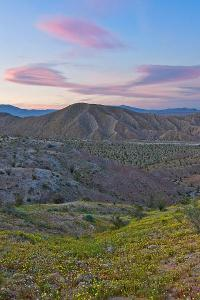 Wildflower Sunset, Anza Borrego