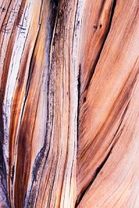 bristlecone-pine-twisted-wood