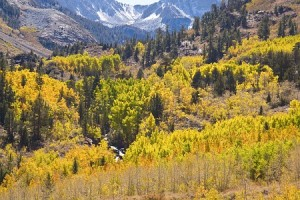 Fall Foliage in McGee Canyon