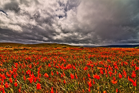 Storm Clouds over Poppy Field