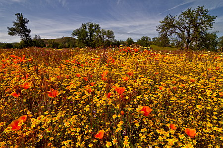 Wildflower Meadow on Highway 58